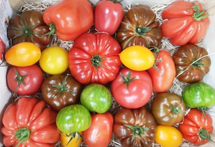 Tomate Saveur d'Antan