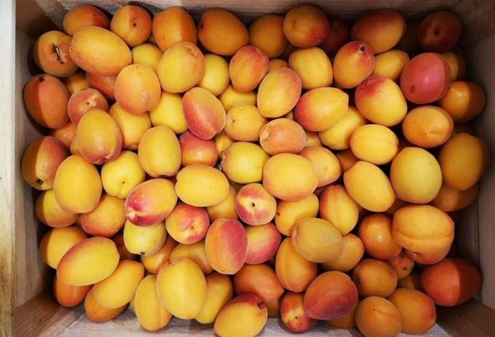 Abricot Confiture