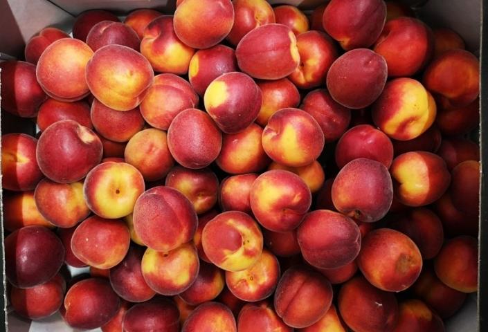 Abricot Pays